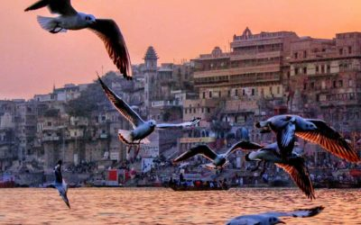 EVDNEWS#25 Yatra India